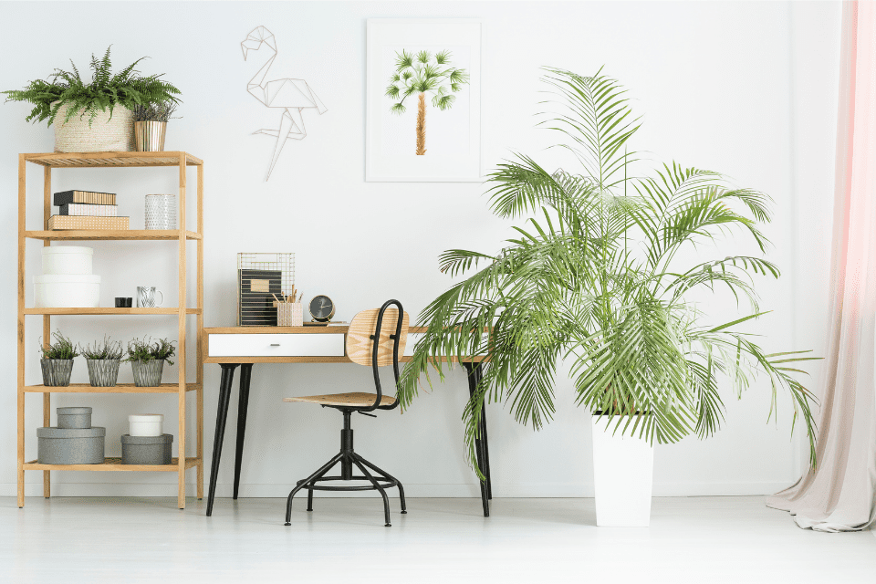 Office-With-Plants